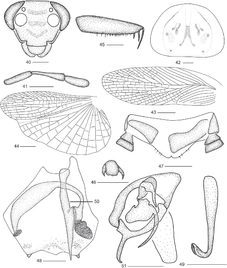 figure 40–51