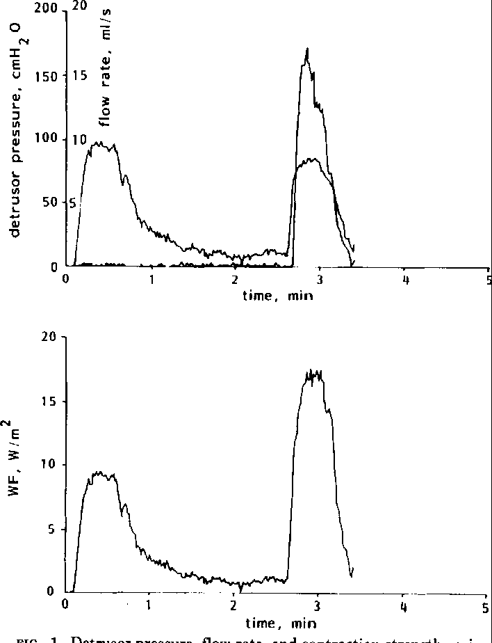 Urinary Bladder Function And Its Control In Healthy Females