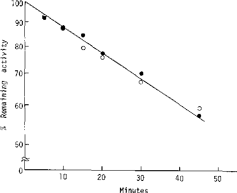 Fig. 5. Rates of thermal inactivation of cytoplasmic malate dehydrogenase allozymes at 45 C. Enzyme activity was measured with malate as substrate in 0.1 glycine-NaOH buffer, pH 9.5. o, MDHf; e, MDH s.
