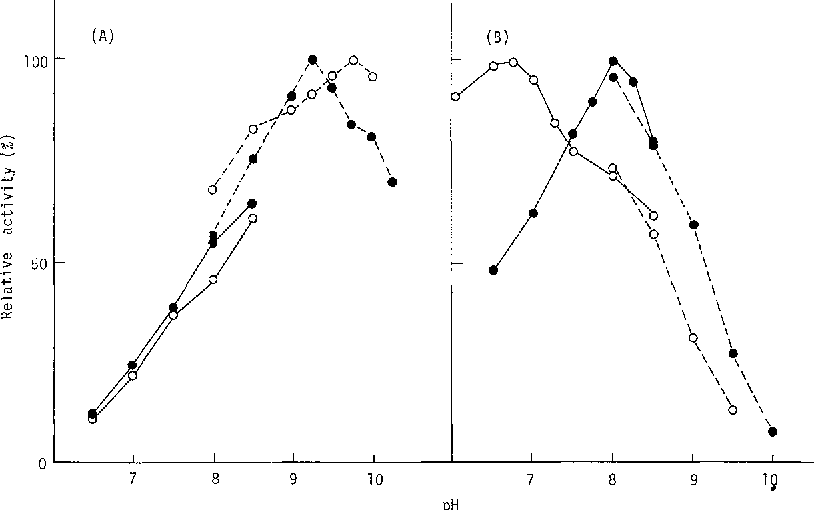 Fig. 2. Effect o fpH on the activity of cytoplasmic malate dehydrogenase allozymes. A: Malate oxidation. B: Oxaloacetate reduction. - - , 0.1 M phosphate buffer; - - - 0.1 M glycine-NaOH buffer, o, MDHf; o, MDH s.