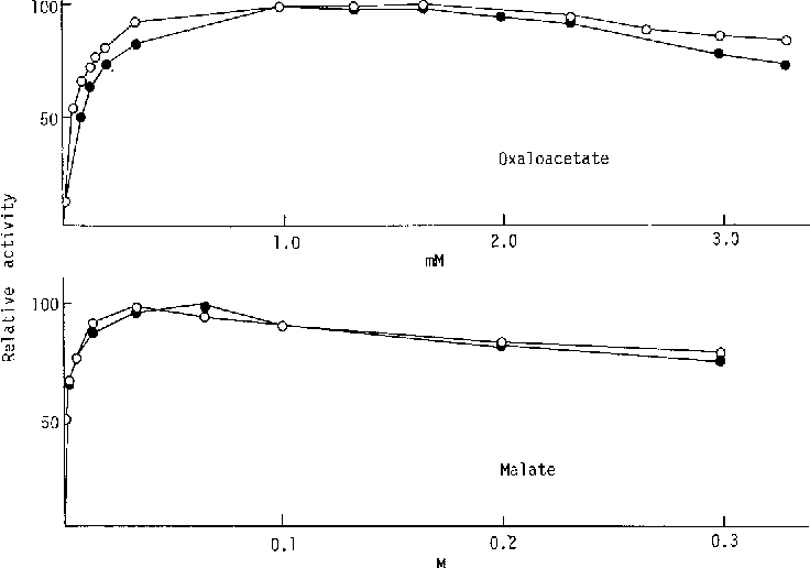 Fig. 3. Relationship between the activities of cytoplasmic malate dehydrogenase allozymes and the concentration of malate and oxaloacetate, o, MDHf; o, MDH s.