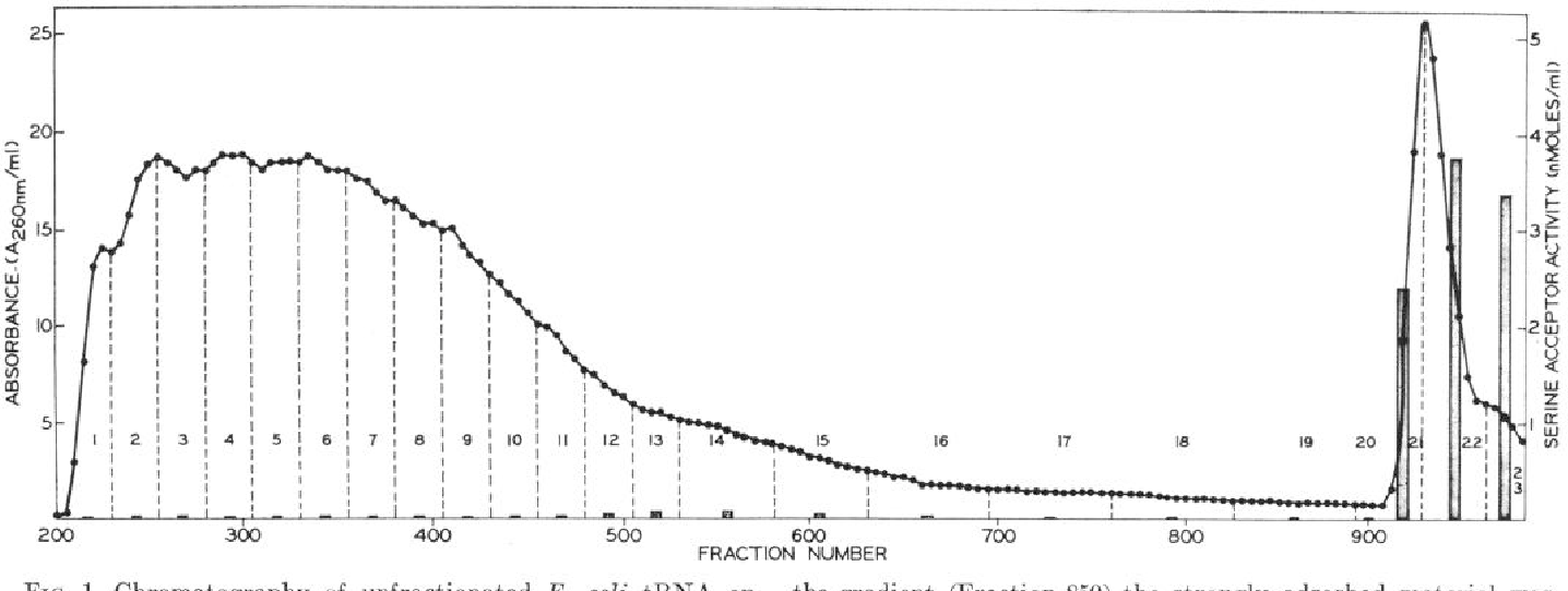"FIG. 1. Chromatography of unfractionated E. coZi tRNA on the gradient (Fraction 850) the strongly adsorbed material was benzoylated DEAlGcellulose. tRNA (173,000 AZG~ units) was eluted with a solution of 1.5 M NaCl, 0.05 M sodium acetate (pH applied on a benzoylated DEAE-cellulose column (6.0 X 70 cm) 5.0), and 14% ethanol. Fractions, 24.5 ml, were collected every previously equilibrated with 0.2 M NaCl-0.05 M sodium acetate 5 min and pooled as indicated. O-0, absorbance (260 nm); (pH 5.0). Elution was carried out at 2"" with a linear gradient vertical bars represent serine acceptor activity; the fractions were (0.4 -+ 1.1 M) of NaCl (total volume of gradient was 20 liters) pooled as indicated by the dotted Zincs. containing 0.05 M sodium acetate (pH 5.0). On completion of"