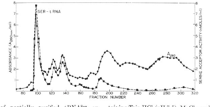 FIG. 2. Chromatography of partially purified tRNAser on benzoylated DEAE-cellulose. The tRNA of Fractions 21 and 22 taining Tris-HCI (pH 7.5), MgC$, and NaN3 in the concentrations of Fig. 1 (9850 A~60 units) was applied to a column (2.1 X 150 cm) used in the equilibration buffer. The salt gradient was followed of benzoylated DEAE-cellulose previously equilibrated with 0.2