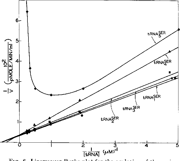 FIG. 6. Lineweaver-Burke plot for the acylation of the various E. coli tRNASer species by pure E. coli seryl-tRNA synthetase. Each point on this graph represents the initial rate of duplicate reactions determined by taking five samples per reaction. Each reaction mixture (270 ~1) contained, per ml : 50 rmoles of potassium phosphate buffer (pH 7.5), 10 rmoles of magnesium acetate, 2 pmoles of ATP, 4 @moles of 2-mercaptoethanol, 90 nmoles of EDTA, 5 nmoles of [14C]serine, 0.45 rg of E. coli seryl-tRNA synthetase, and varying quantities of purified tRNASer. Samples (50 ~1) were taken at 0.5, 1.5, 2.5, 3.5, and 4.5 min, spread rapidly on Whatman No. 3 MM discs, and immediately dropped into cold 57, trichloracetic acid.