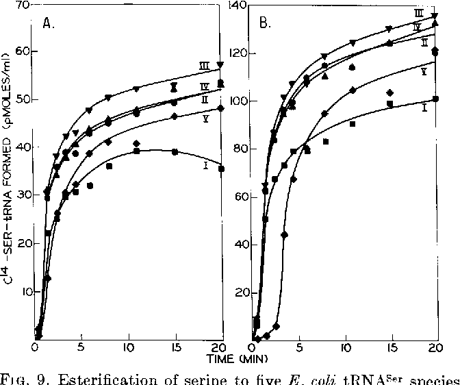 FIG. 9. Esterification of serine to five E. coli tRNASer species by yeast seryl-tRNA synthetase. All components were the same as in the legend to Fig. 7 except the enzyme (800 pg per ml).
