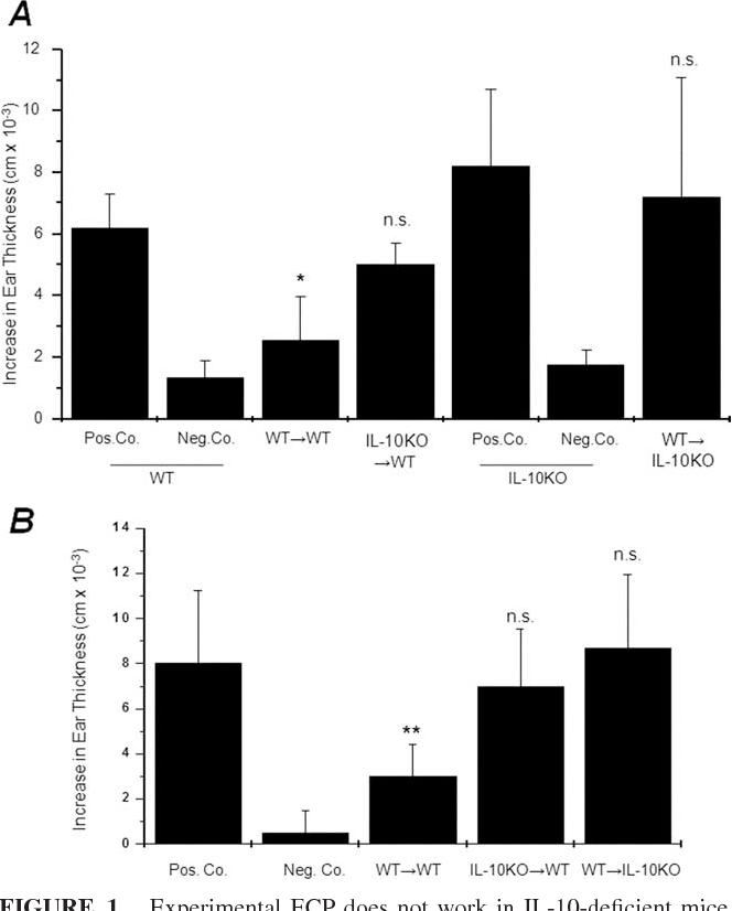 FIGURE 1. Experimental ECP does not work in IL-10-deficient mice. A, Splenocytes and lymph node cells were obtained from DNFB-sensitized IL-10-deficient (IL-10KO) or WT mice and treated with 8-MOP and UVA. Cells were injected into WT recipients that were sensitized against DNFB 5 days later (IL-10KO3WT). Similar experiments were performed with WT mice as donors and IL-10-deficient mice as recipients (WT3 IL10KO). Five days thereafter, recipient mice were challenged with 0.3% DNFB. Ear swelling was measured 24 h after challenge. WT mice and IL-10KO mice were sensitized and challenged as Pos. Co. or challenged without sensitization as Neg. Co. B, Splenocytes and lymph node cells obtained from primary recipients (A) were injected into naive WT mice (secondary recipients). Mice were sensitized against DNFB 24 h after transfer, and ear challenge was performed 5 days thereafter. WT mice served as positive and negative controls. Ear swelling response is expressed as the difference (cm 10 3, mean SD) between the thickness of the challenged ear compared with the thickness of the vehicle-treated ear. , p 0.001 vs Pos. Co. (WT); , p 0.01 vs Pos. Co.; n.s., nonsignificant vs Pos. Co.