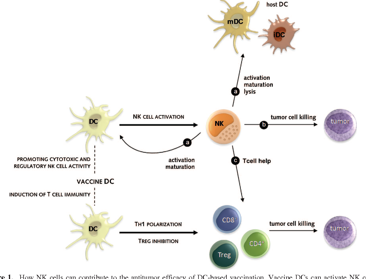 PDF] NK cells: key to success of DC-based cancer vaccines