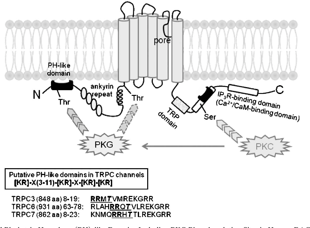 Regulation Of Cardiovascular Functions By The Phosphorylation Of