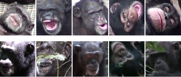 Figure 3 for Similarity Learning Networks for Animal Individual Re-Identification - Beyond the Capabilities of a Human Observer