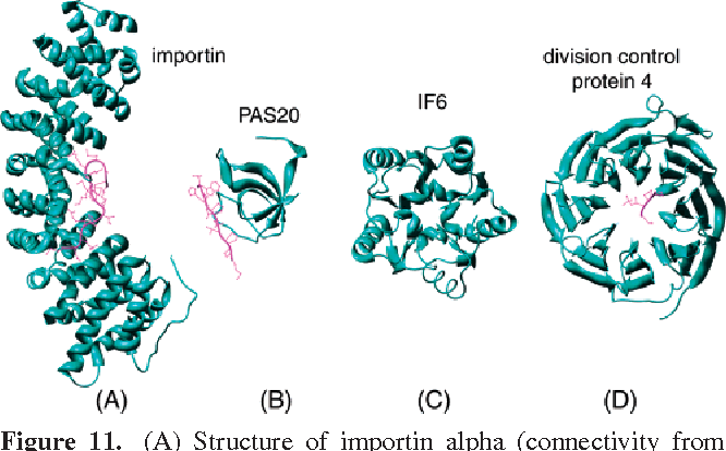 Figure 11. (A) Structure of importin alpha (connectivity from DIP225 is 197; DIP ID: 728N, PDB ID: 1un0A) is shown here complexed with a peptide containing the nuclear localization sequences. The peptide is in a wire frame. (B) The structure of SH3 domain fragment of peroxisomal membrane protein PAS20 (connectivity 21, DIP ID: 2473N, PDB ID: 1n5zA) in complex with a peptide substrate in a wire frame. (C) The structure of Eukaryotic translation initiation factor 6 (connectivity is 48, DIP ID: 5395N; PDB ID: 1g62A). (D) The structure of cell division control protein 4 (connectivity 7, DIP ID: 1625N, PDB ID: 1nexB). The length of the full protein is 779, while the PDB file contains 444 residues. For clearer images, other chains are removed.