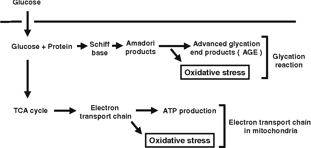 Fig. 1 Mechanisms contributing to the increase of oxidative stress under diabetic conditions