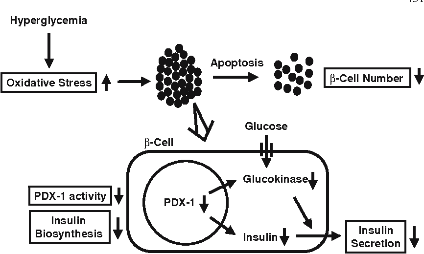 Fig. 2 Involvement of oxidative stress in pancreatic β-cell dysfunction