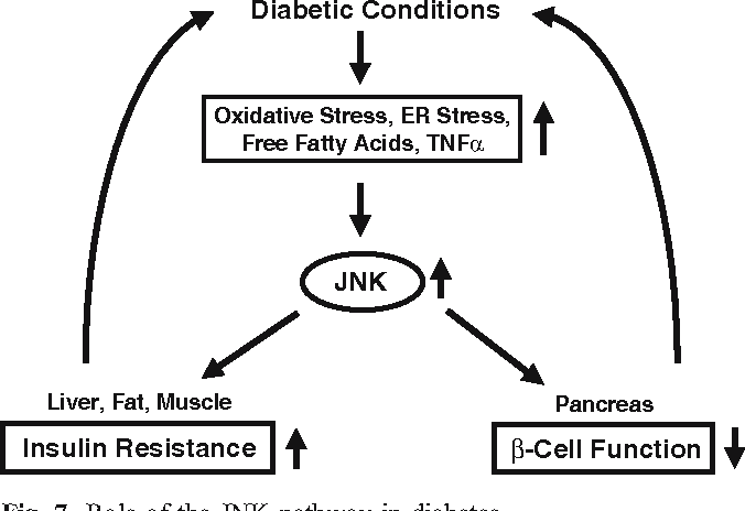 Fig. 7 Role of the JNK pathway in diabetes