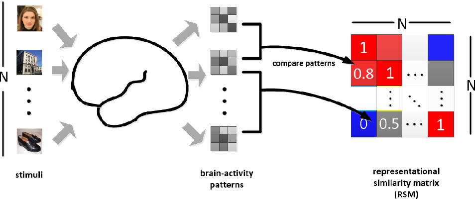 Figure 1 for Gradient-based Representational Similarity Analysis with Searchlight for Analyzing fMRI Data