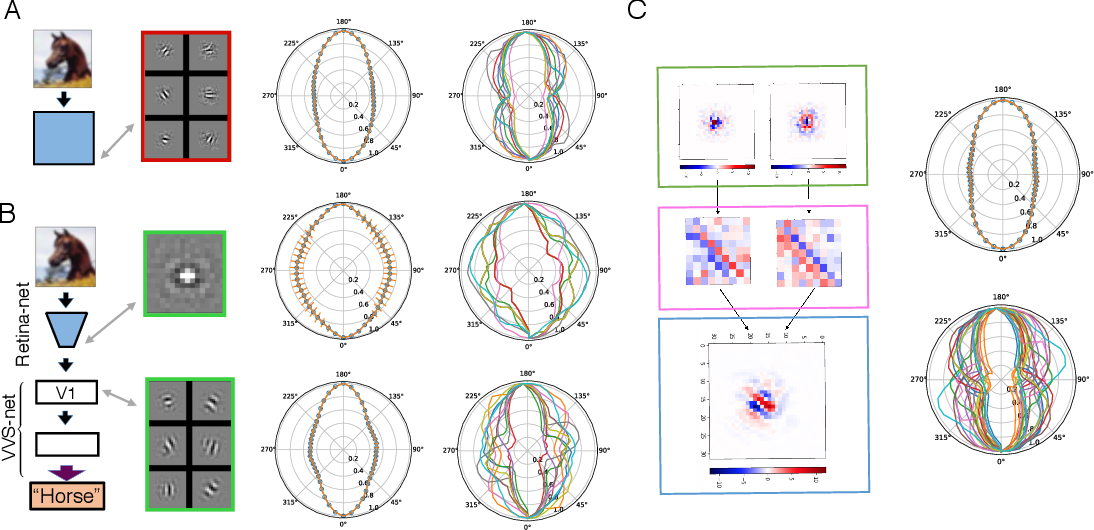 Figure 4 for A Unified Theory of Early Visual Representations from Retina to Cortex through Anatomically Constrained Deep CNNs