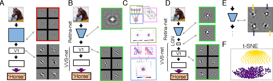 Figure 2 for A Unified Theory of Early Visual Representations from Retina to Cortex through Anatomically Constrained Deep CNNs