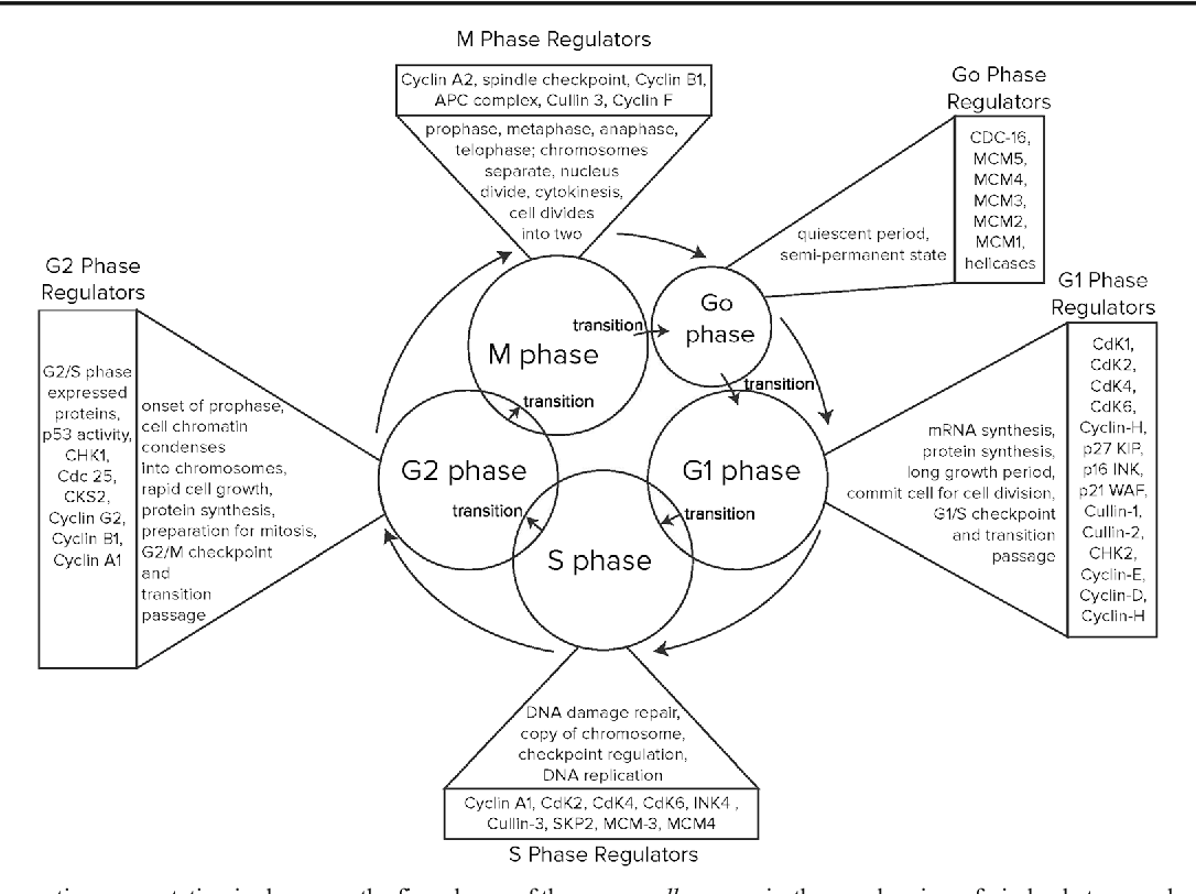 figure 1 from the alpha fetoprotein afp third domain a search for F Five Line Dance 1 a diagrammatic representation is shown on the five phases of the cell cycle