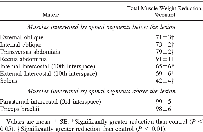 Changes In Expiratory Muscle Function Following Spinal Cord Section