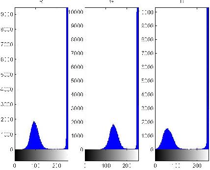 Figure 2 for A Leaf Recognition Algorithm for Plant Classification Using Probabilistic Neural Network