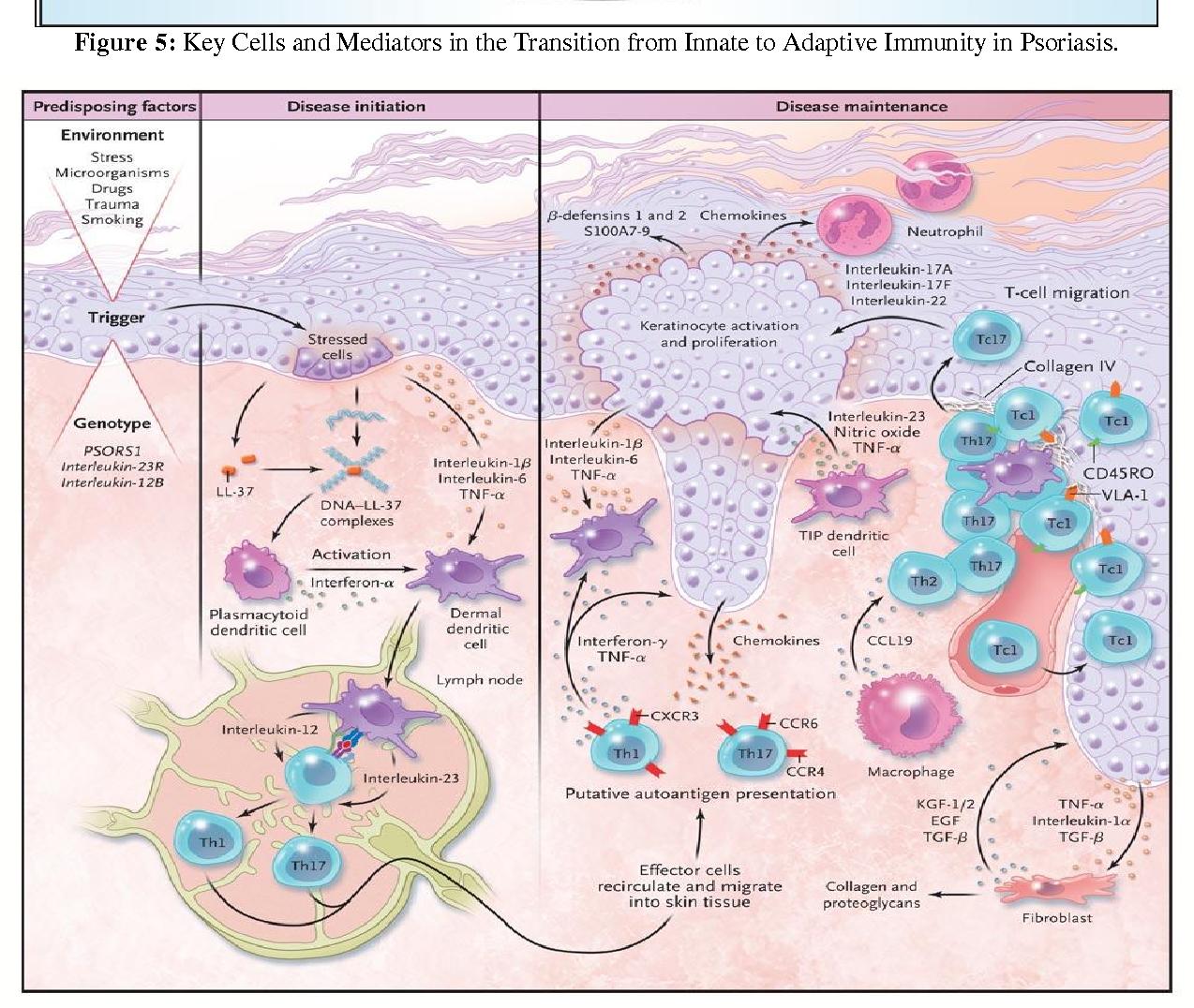 PDF] PSORIASIS A CHRONIC , NON-CONTAGIOUS AUTOIMMUNE DISEASE : A