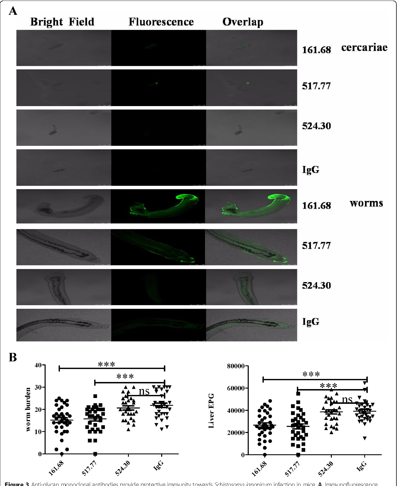 Protective immunity against schistosoma japonicum infection can be figure 3 malvernweather Choice Image