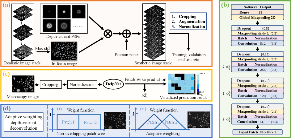 Figure 3 for Adaptive Weighting Depth-variant Deconvolution of Fluorescence Microscopy Images with Convolutional Neural Network
