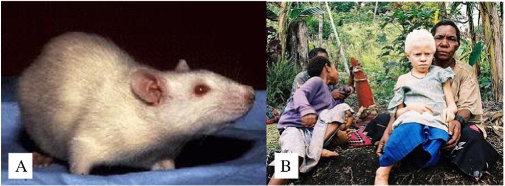 Figure 3 from Analogs of human genetic skin disease in