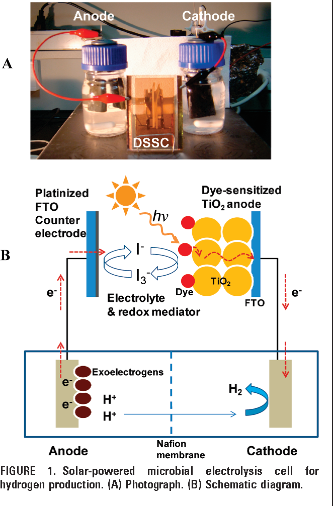 A solar-powered microbial electrolysis cell with a platinum catalyst