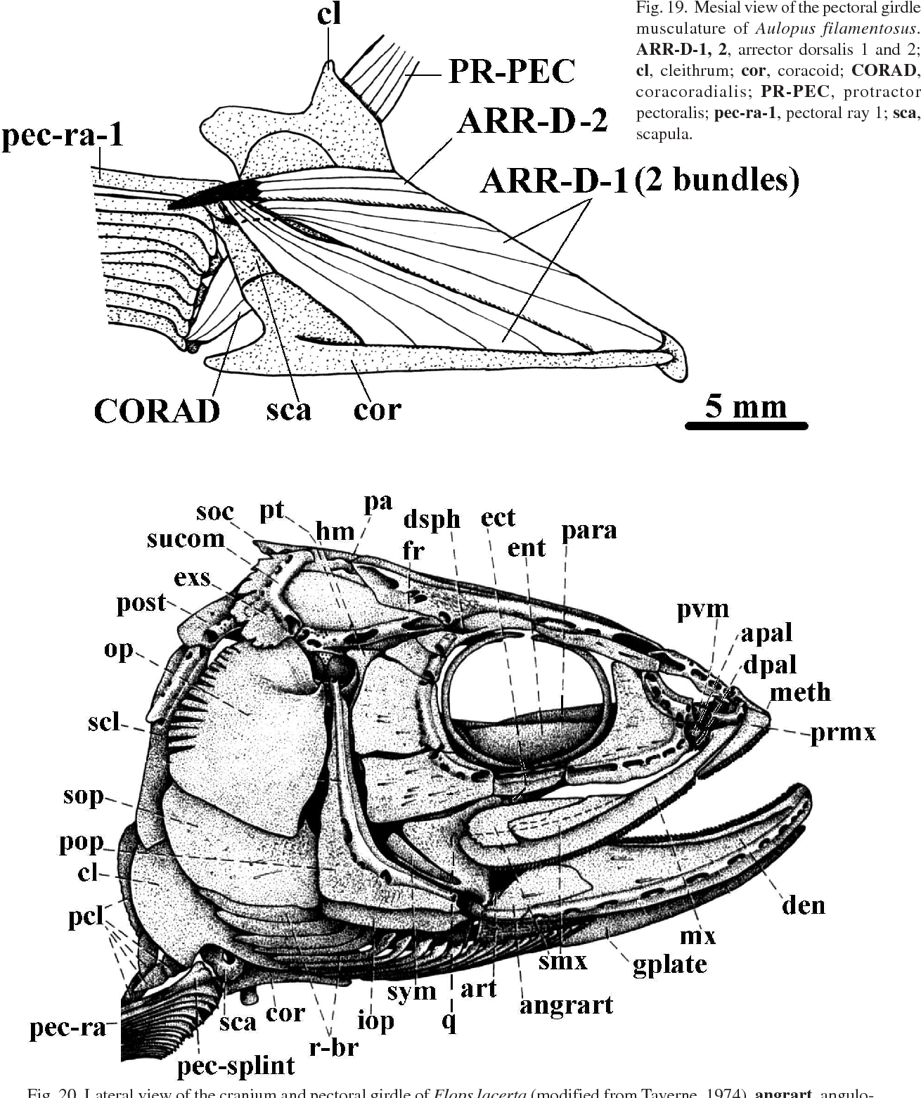 diagram of pecs