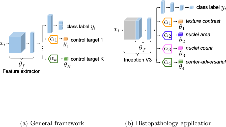 Figure 1 for Guiding CNNs towards Relevant Concepts by Multi-task and Adversarial Learning