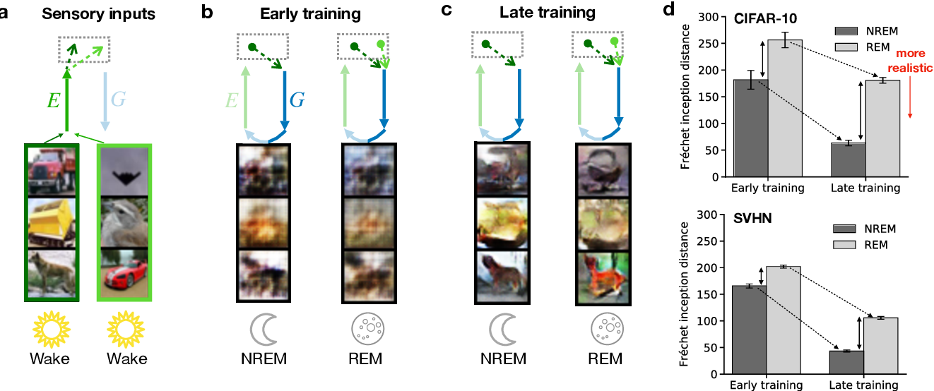 Figure 4 for Memory semantization through perturbed and adversarial dreaming
