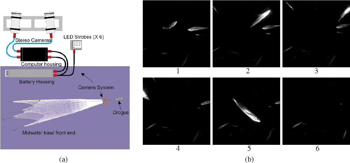 Figure 1 for Tracking Live Fish from Low-Contrast and Low-Frame-Rate Stereo Videos