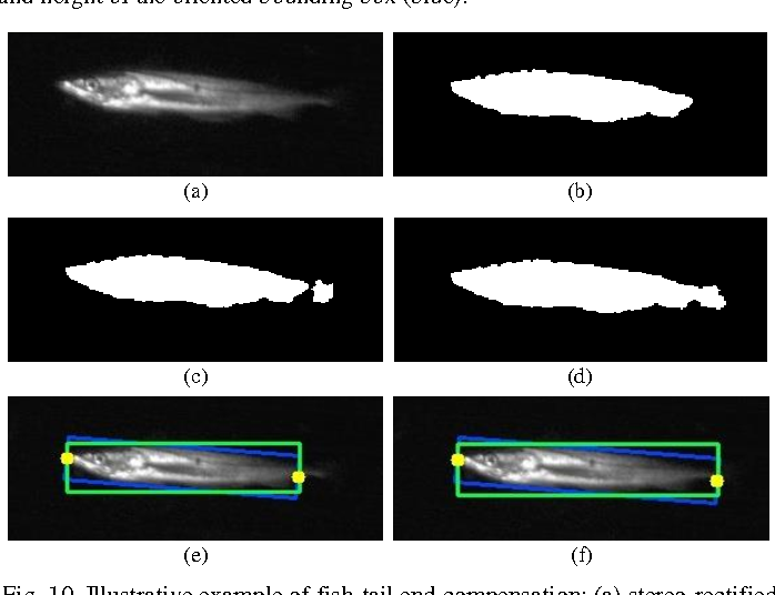 Figure 2 for Tracking Live Fish from Low-Contrast and Low-Frame-Rate Stereo Videos