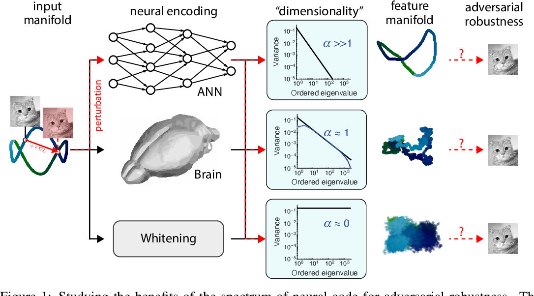 Figure 1 for On 1/n neural representation and robustness