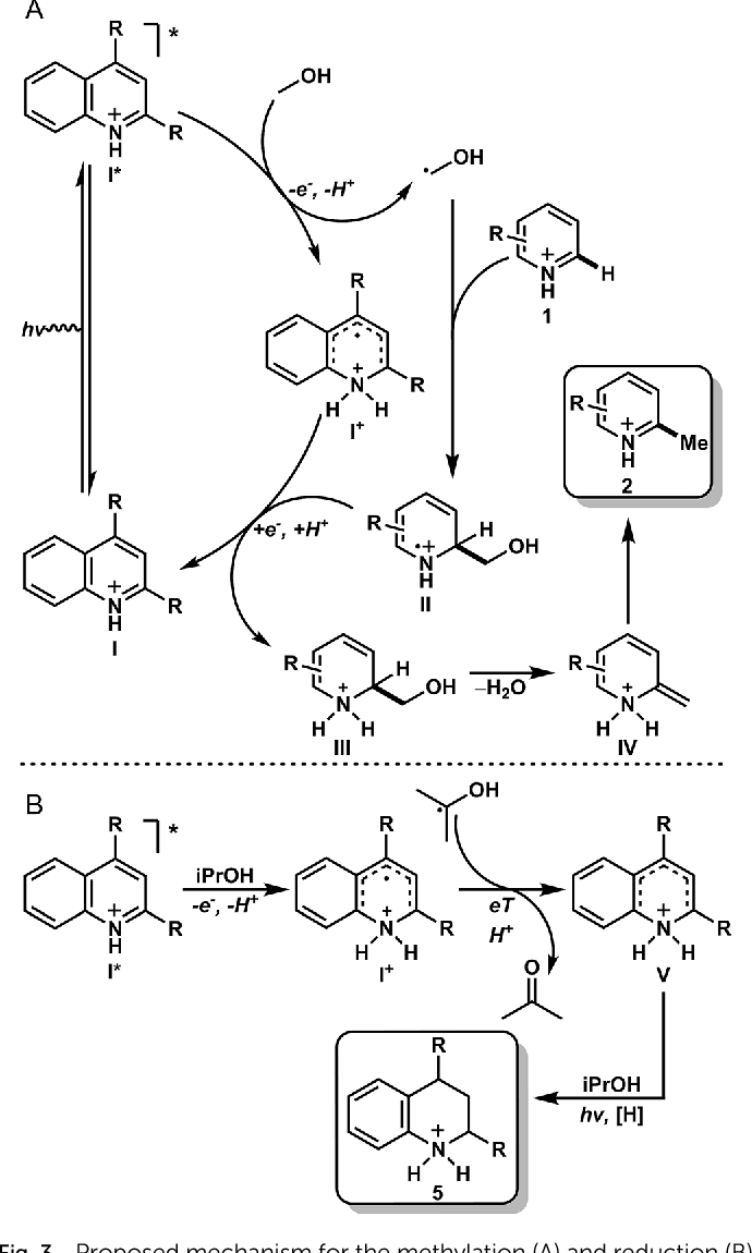 Fig. 3 Proposed mechanism for the methylation (A) and reduction (B) of heteroarenes. The same mechanism is operative in both the stoichiometric and catalytic methylation examples.
