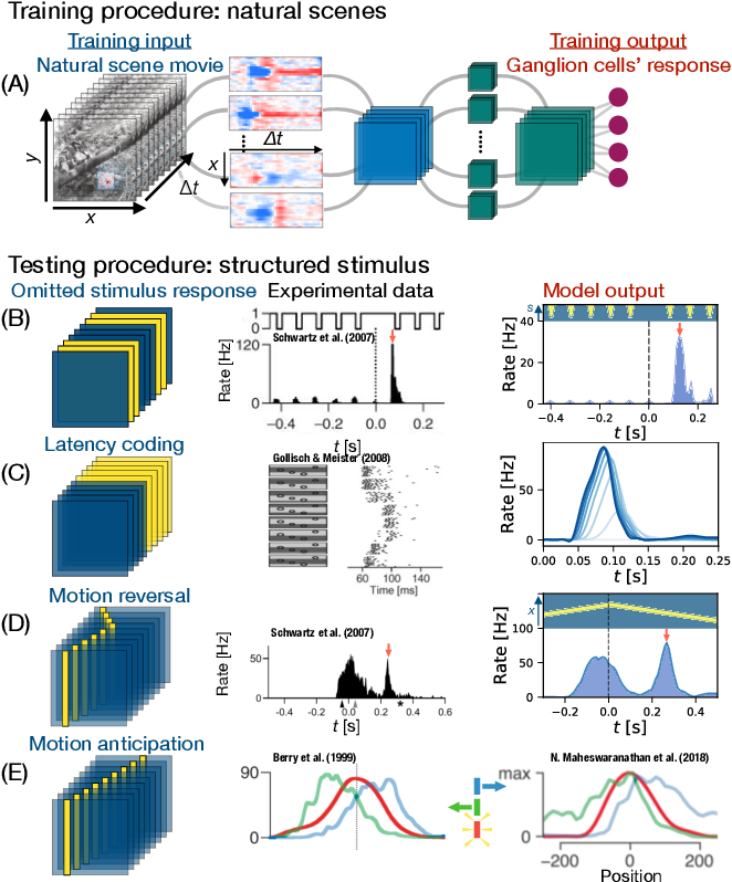 Figure 1 for From deep learning to mechanistic understanding in neuroscience: the structure of retinal prediction