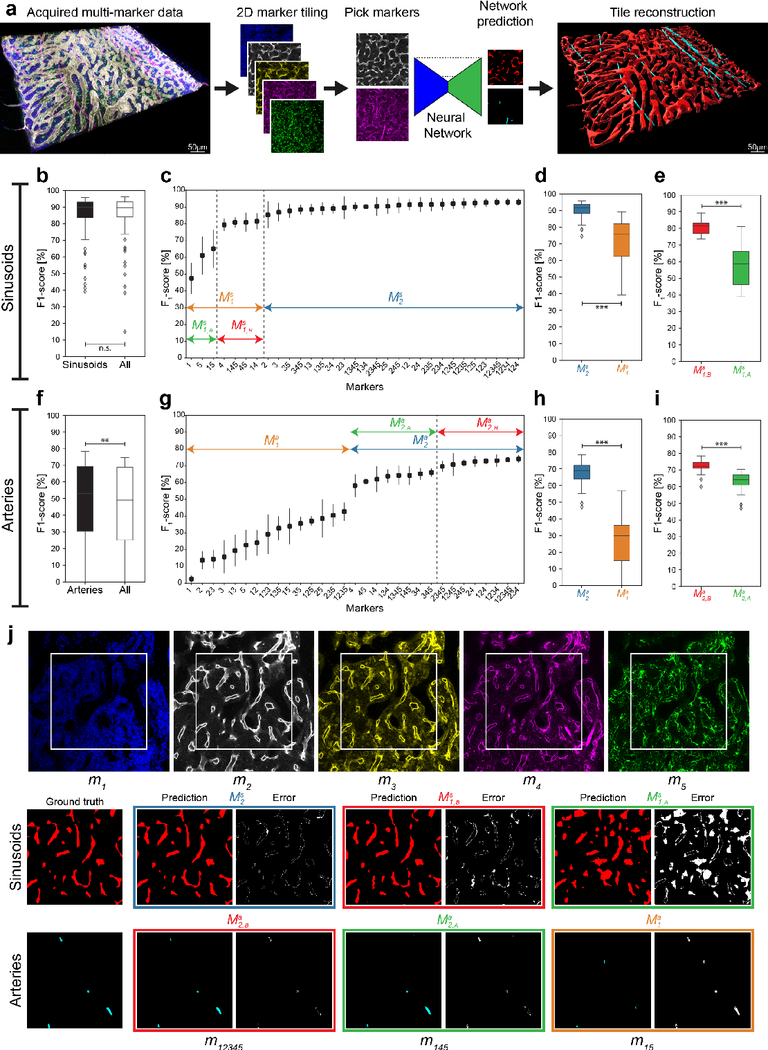 Figure 1 for Modality Attention and Sampling Enables Deep Learning with Heterogeneous Marker Combinations in Fluorescence Microscopy