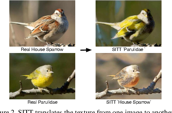 Figure 3 for Single Image Texture Translation for Data Augmentation