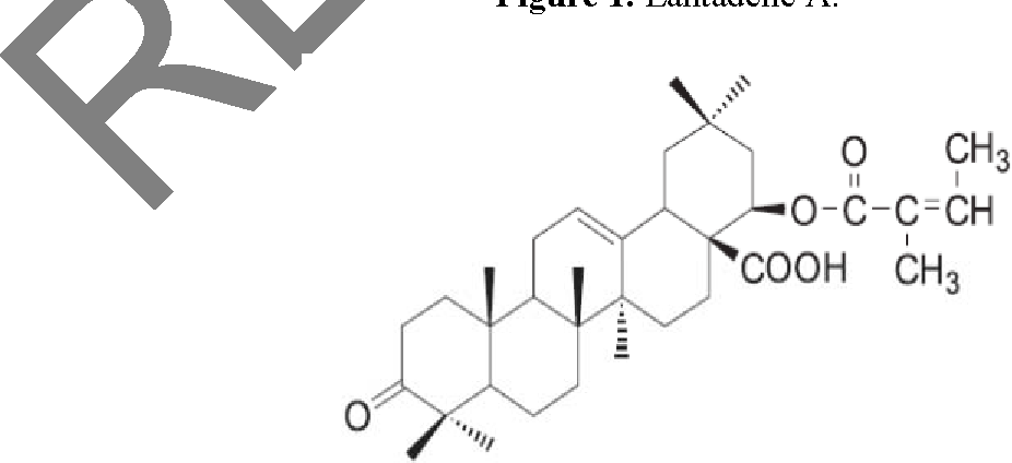 Evaluation of the hepatoprotective effects of lantadene a a figure 1 ccuart Images
