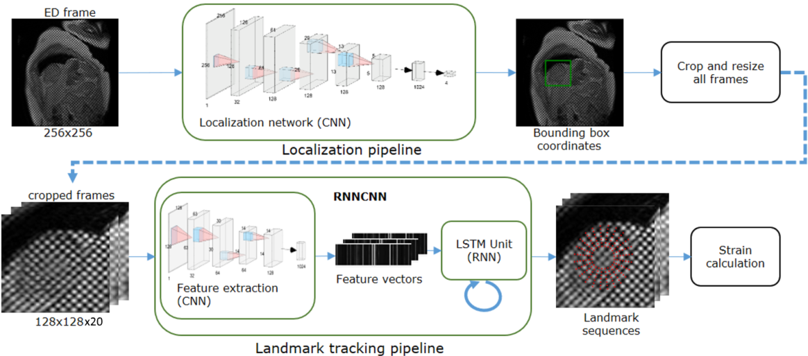 Figure 3 for Fully Automated Myocardial Strain Estimation from CMR Tagged Images using a Deep Learning Framework in the UK Biobank