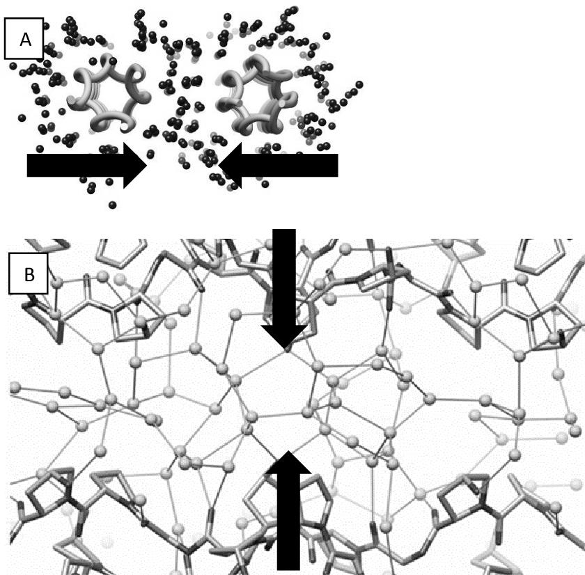 Figure 11 from DSC investigation of bovine hide collagen at varying