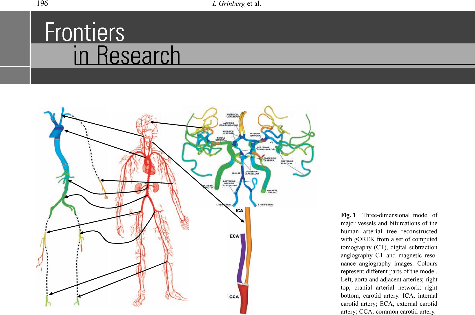 Large Scale Simulation Of The Human Arterial Tree Semantic Scholar