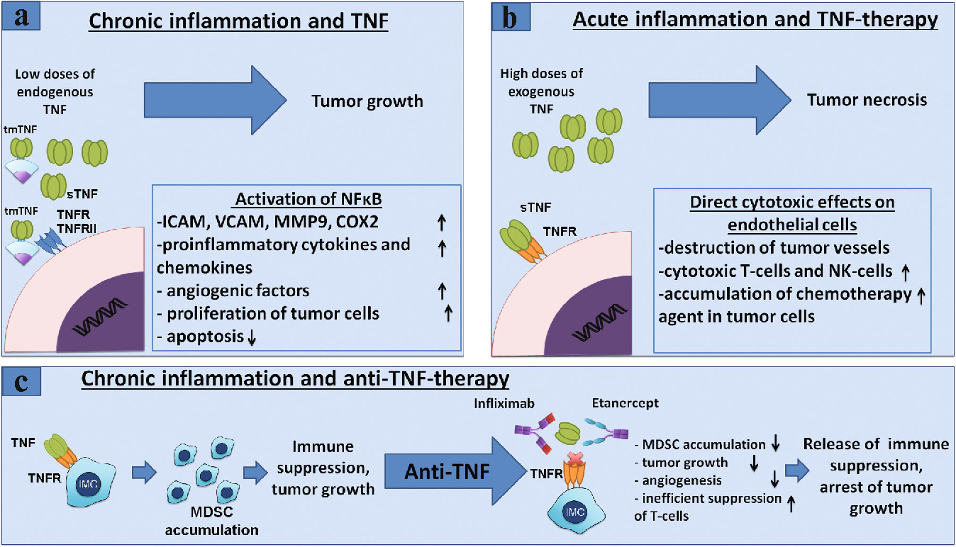 Figure 2 from Myeloid-derived suppressor cells and proinflammatory