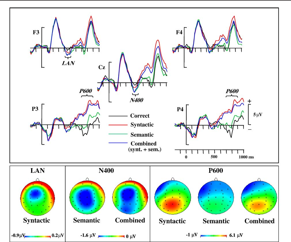 Semantics Prevalence Over Syntax During Sentence Processing A Brain