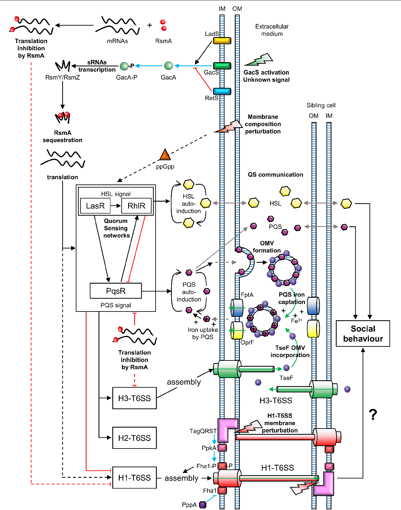 Figure 2 from The Type VI Secretion System: A Dynamic System for