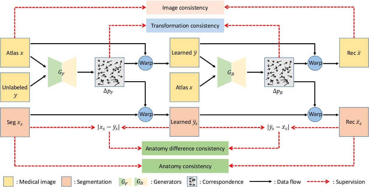 Figure 3 for LT-Net: Label Transfer by Learning Reversible Voxel-wise Correspondence for One-shot Medical Image Segmentation