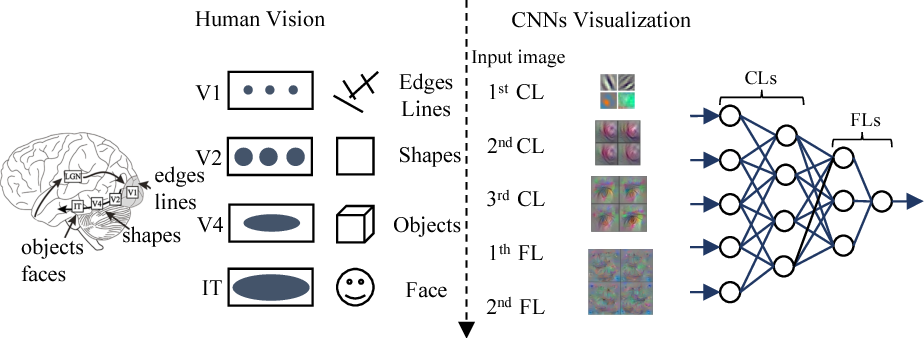 Figure 4 for How convolutional neural network see the world - A survey of convolutional neural network visualization methods