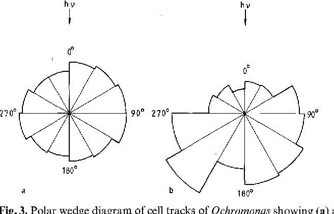 Phototaxis In The Flagellates Euglena Gracilis And Ochromonas
