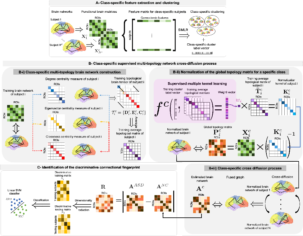 Figure 1 for Supervised Multi-topology Network Cross-diffusion for Population-driven Brain Network Atlas Estimation