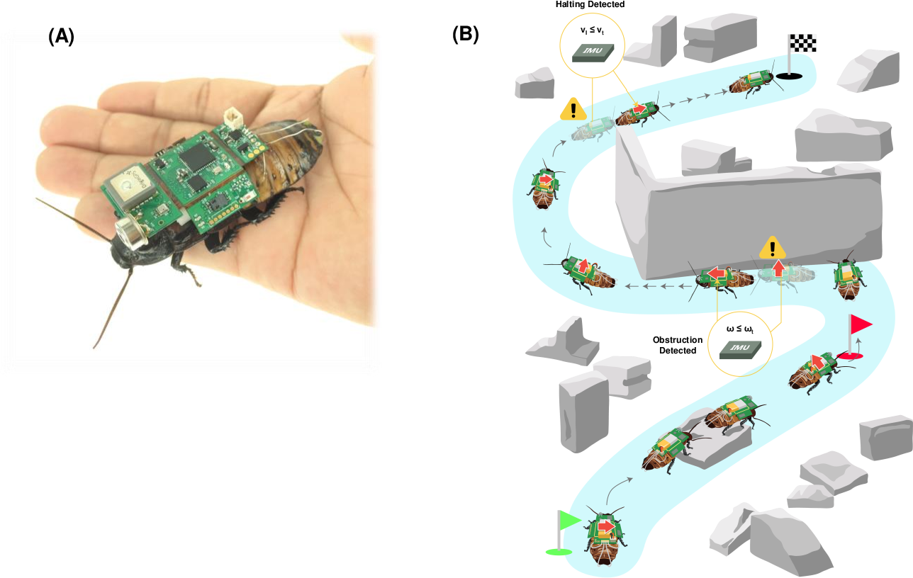 Figure 1 for Insect-Computer Hybrid System for Autonomous Search and Rescue Mission